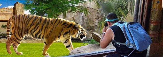 Parques de atracciones en Alicante Terra Natura: disfruta de la Zooimmersión, la mejor experiencia de contacto con los animales..